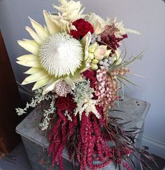 What a stunning color combination! Deep maroon and pale cream King Protea #flowers