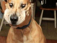 O que acontece com seu cão quando você dá um petisco? 3