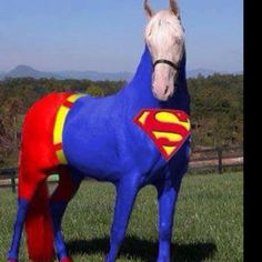 super horse to the rescue