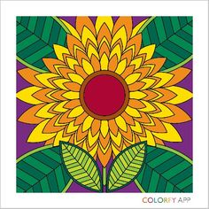 Colorfy color app