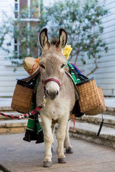 A pack donkey -- too cute!