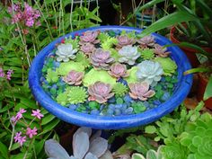 Succulent jewel box garden- Created inside a cobalt blue birdbath, this beautiful composition of rosette succulent aeonium and sempervivum surrounded by tumbled glass balls was inspired by Monet's lily pond paintings.