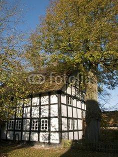 Alter Baum und altes Fachwerkhaus am Bartholdskrug in Lipperreihe bei Bielefeld im Teutoburger Wald in Ostwestfalen-Lippe