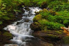 Seasonal waterfall along the Larch Mountain Trail. #ColumbiaRiverGorge #Hikelandia