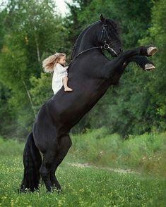 Tag a friesian lover! Big Horses, Funny Horses, Horses And Dogs, Black Horses, Cute Horses, Pretty Horses, Horse Love, Funny Dogs, Funny Kitties