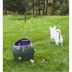 PetSafe Automatic Ball Launcher Dog Toy, Tennis Ball Throwing Machine best price: PetSafe Automatic Ball Launcher Dog Toy, Tennis Ball Throwing Machine for Dogs in Easy-Open Packaging. SAFETY: Multiple sensors guard you and your pooch; Automatic Ball Launcher, Dog Ball Launcher, Dog Lover Gifts, Dog Gifts, Dog Lovers, Ball Throwing Machine, Ball Thrower, Pet Ball, Dog Christmas Gifts