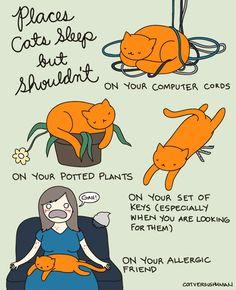 """""""Posti in cui i gatti dormono, ma non dovrebbero... Sui fili del tuo computer Sulle tue piante. Sul tuo mazzo di chiavi (specialmente quando tu li stai cercando) Sulla tua amica allergica. Yasmine Surovec"""