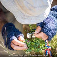 Game Reserve, Biomes, Conservation, Rings For Men, Link, Men Rings, Canning