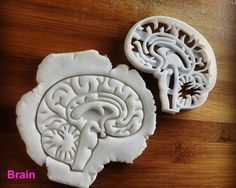 Anatomical Brain cookie cutter | Heart cookies cutters | biscuit cutter | Gifts for medical student science students | one of a kind | ooak