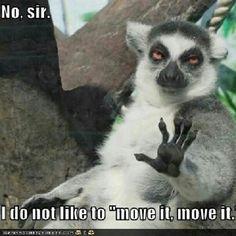 Lol #Madagascar #Funny #Animal #Meme