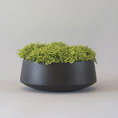 Orchid or succulent bowl rotation Succulent Bowls, Succulents, Green Plants, Potted Plants, Flower Planters, Planter Pots, Moss Centerpieces, Wood Floor Texture, Container Plants