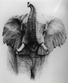 Alan Ainslie - South African Wildlife artist and illustrator Wildlife Paintings oil/acrylic watercolour pastel or pencil leopard lion nyala elephant Realistic Elephant Tattoo, Elephant Tattoo Design, Elephant Tattoos, Animal Drawings, Cool Drawings, Pencil Drawings, Wildlife Paintings, Wildlife Art, African Elephant