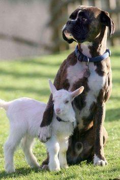 ❧ Pets - Animaux de compagnie ❧