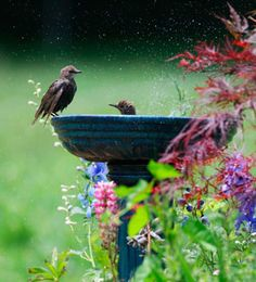♥ bask in the beauty of nature, something as simple as a bird bath can be so soothing & easy! All you need is a bird bath & water. Little Birds, Love Birds, Beautiful Birds, Beautiful Gardens, Magical Gardens, Dream Garden, Garden Art, Bird Watching, Bird Feathers