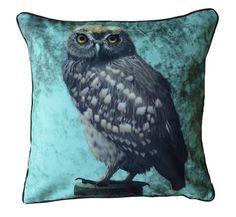 Little Owl Celadon