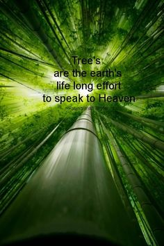 """""""Trees are Earth's endless effort to speak to the listening heaven."""" Rabindranath Tagore"""