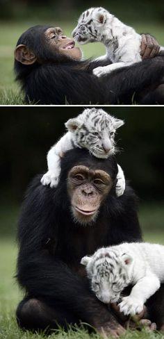 Unusual But Beautiful Interspecies Friendships