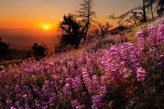 Sunset slope - Sunsets Wallpaper ID 1716285 - Desktop Nexus Nature Flowers Nature, Wild Flowers, Beautiful Flowers, Beautiful Places, Pink Nature, Beautiful Sunset, Free Watercolor Flowers, Sunset Wallpaper, Felder