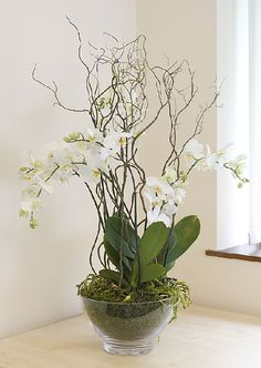 Phalaenopsis_orchid_in_an_Ocean_Oval_brown_planter Phalaenopsis_orchid_in_a_glas. - Phalaenopsis_orchid_in_an_Ocean_Oval_brown_planter Phalaenopsis_orchid_in_a_glass_bowl - Orchid Flower Arrangements, Orchid Planters, Orchid Centerpieces, Orchid Pot, Artificial Flower Arrangements, House Plants Decor, Plant Decor, Urban Planters, Artificial Orchids