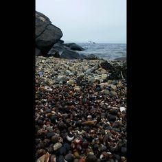 #NoFilter #Adventure #Salem #Massachusetts #Witches #Water #POTD #Shore #SeaShells #Shells #Rocks #Nature #Love by meghannnduhh http://bit.ly/AdventureAustralia