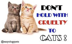 """""""DON'T HOLD WITH CRUELTY TO CATS!"""" @easyologypets #cats  #love"""