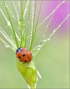 the luck of lady bugs and fresh rain <3