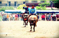 140th Buffalo Racing Festival, Chonburi © www.nikonbaby.com