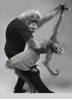 The Orangutango~♛