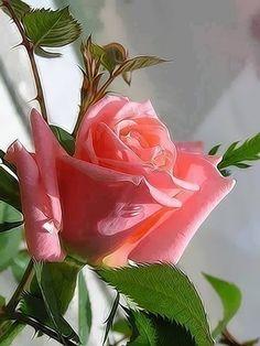 ʚɞ By Anne Angel ʚɞ - ♥ Beautiful flowers ♥Bonitas Flores♥ - Community - Google+