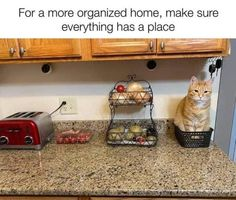 Animal Humour, Cute Animal Memes, Cute Funny Animals, Cute Cats, Cat Fun, Animal Pics, Funny Cat Memes, Funny Cat Videos, Funny Cats