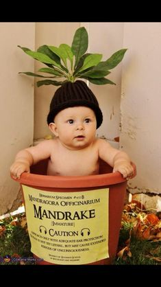 DIY Harry Potter Mandrake Baby Costume from Costume Works.The cutest baby costume ever. For an awesome archive of DIY Halloween Costumes go here. You can find the high resolution version of the mandrake Label created by Crafty Lil' Thing. Theme Harry Potter, Harry Potter Love, Harry Potter Baby Costume, Harry Potter Halloween Costumes, Harry Potter Mandrake, Cute Baby Costumes, Toddler Costumes, Family Costumes, Halloween Bebes