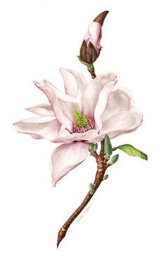 Flower//