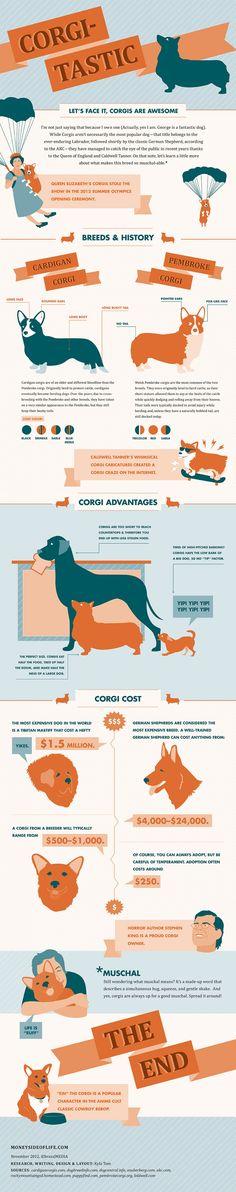 Corgitastic Infographic