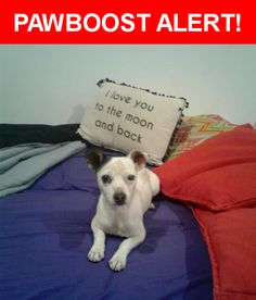 Is this your lost pet? Found in Los Angeles, CA 91324. Please spread the word so we can find the owner!  Jack Russell. White with black spots on the skin and one black ear. Small size  Near Vanalden Ave & Roscoe Blvd