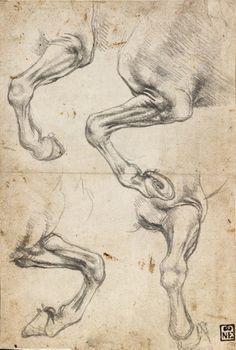 Leonardo da Vinci - Studies Of Horse's Leg (detail), Museum of Fine Arts, Budapest