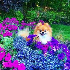 Two of my favs. Dogs & flowers.