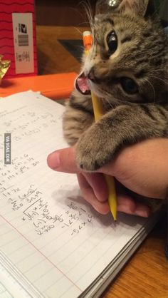 The homework assistant