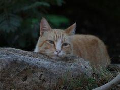 Gato descansando sobre una roca