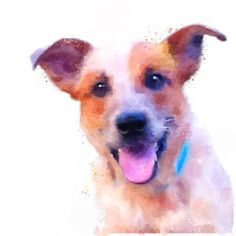 Cattle Dog Watercolor Print • Animal Art and Photography