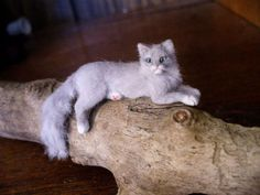Dollhouse-Miniature-Gray-Cat-Handsculpted