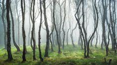 Bolehill Mist 4 by James Mills