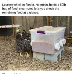 Raising Backyard Chickens, Keeping Chickens, Backyard Farming, Pet Chickens, Cute Chicken Coops, Diy Chicken Coop Plans, Backyard Chicken Coops, Chicken Garden, Chicken Life