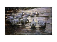 Ducks in Reflected Light by the Shore of a Lake Giclee Print by Alexander		 Koester at Art.com