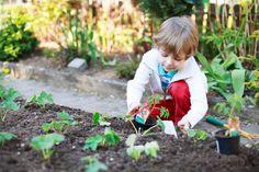 6 passos para iniciar uma horta escolar