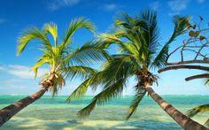 Punta Cana, un paraíso de palmeras, arenas blancas y playas cristalinas en República Dominicana!
