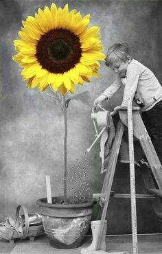 We see in color, and we think in black and white./Vediamo a colori e pensiamo in bianco e nero. Sunflower Pictures, Sunflower Art, Sunflower Quotes, Color Splash, Color Pop, Splash Art, Splash Photography, Black And White Photography, Colour Photography