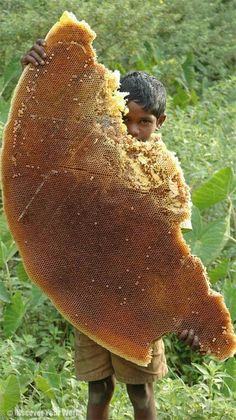 Honey is Life - The Kattunayakan are tribal people who live deep in the forests in South India. They collect and sell wild honey. Children as young as 8 go along and actively participate in harvesting the honey from trees up to 80 ft high. We Are The World, People Of The World, Wild Honey, Raw Honey, Natural Honey, Tribal People, Save The Bees, Bees Knees, Bee Keeping