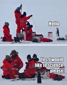 Aspiring scientist penguin
