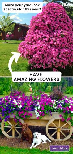 Find out the secret to having an amazing garden and beautiful abundant flowers in your yard. Make your neighbors jealous of your green thumb! Outdoor Gardens, Garden Decor, Garden Containers, Backyard Landscaping Designs, Beautiful Flowers Garden, Plants, Planting Flowers, Backyard Landscaping, Lush Garden