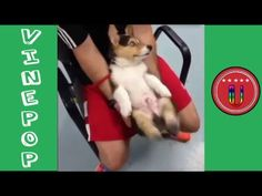 Funny Pet and Animal  | Best Vines | Hilarious Vine Compilation (so funny)
